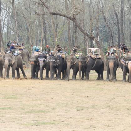 Safari, Chitwan, Nepal