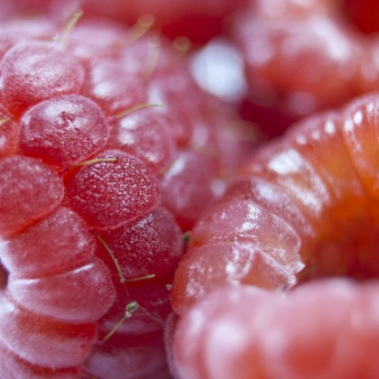 Fresh sweet raspberries close up.