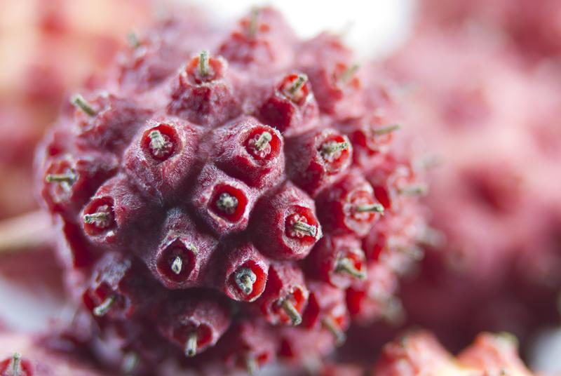 Seed Closeup