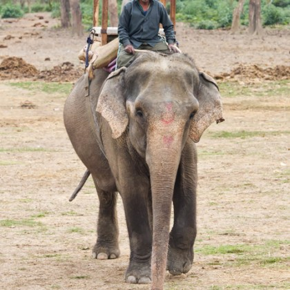 mahout and his elephant – CHITWAN, NEPAL