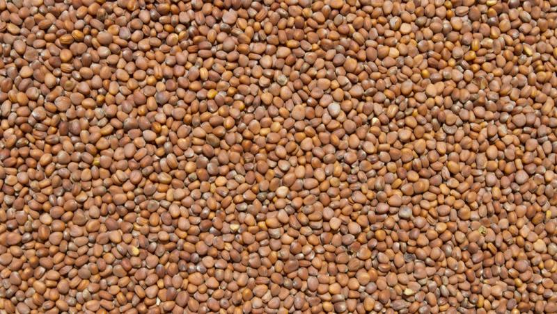 mula-seed-sm