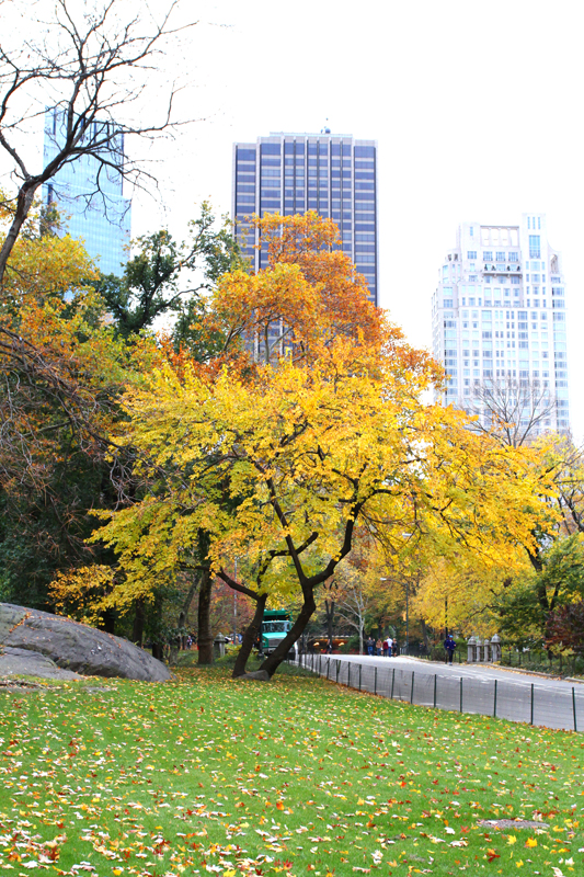 A green lawn in Central Park in New York City, Fall