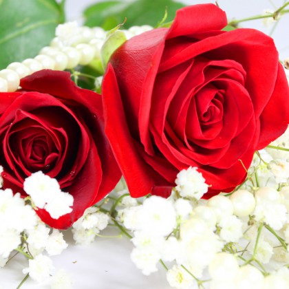 Image of roses and on white background