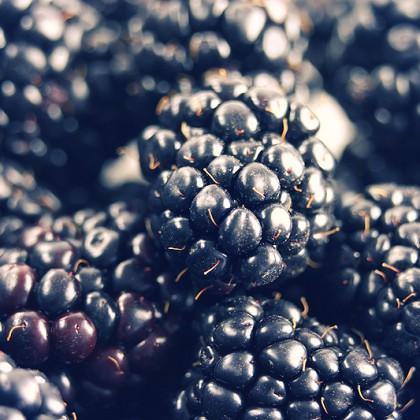 Close up shot of ripe blackberries