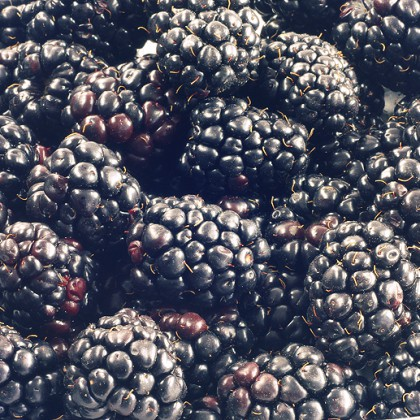 Close up shot of ripe blackberries