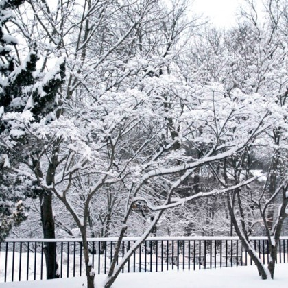 Trees with snow-covered branches.